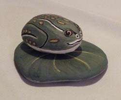 Painted Rock Frog